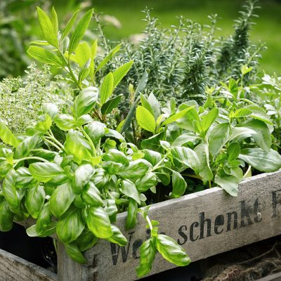 Indoor & Outdoor Herb Gardens