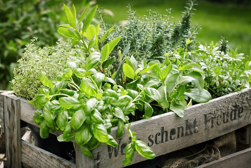Indoor & Outdoor Herb Gardens