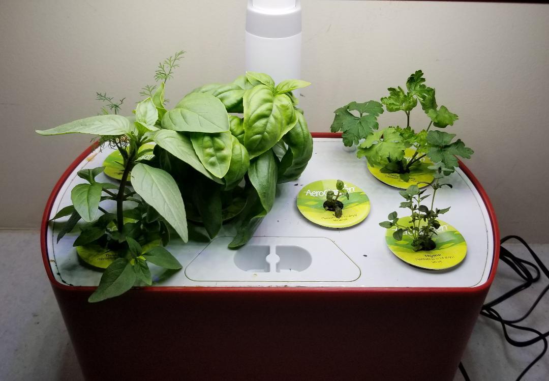 Indoor Aerogarden Herb Garden
