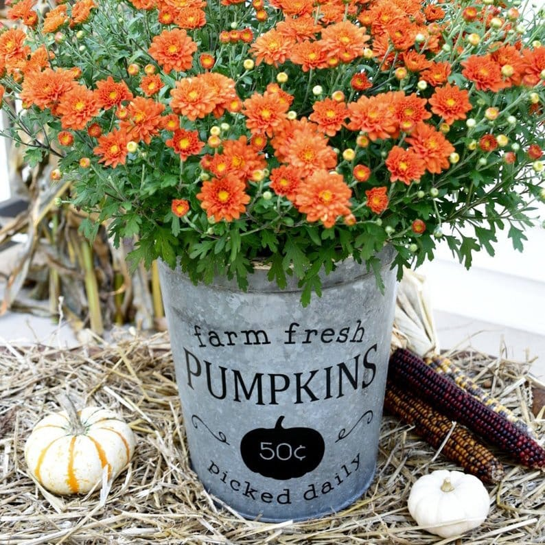 Beautiful Fall Decor Finds - Pumpkin Bucket