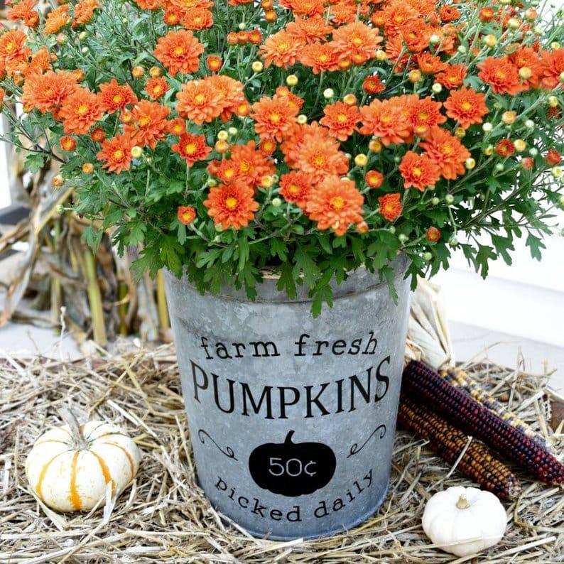 Beautiful Fall Decor Finds - Pumpkin Bucket